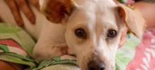 Foto de cachorro olhando para a câmera