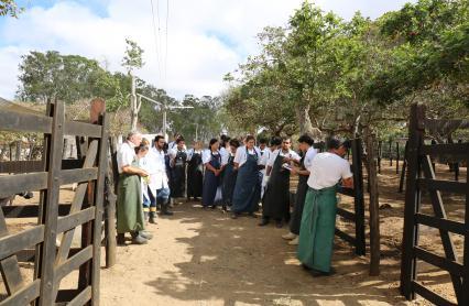 médicos veterinários da clínica de bovinos de garanhuns